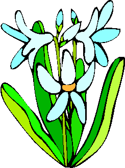 flower image 13