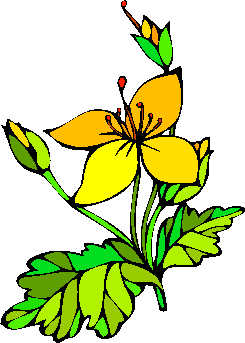 flower image 14