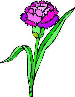flower image 21