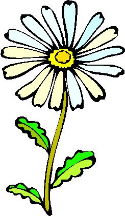 flower image 22