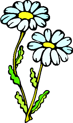 flower image 23