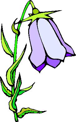 flower image 26