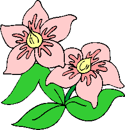 flower image 32