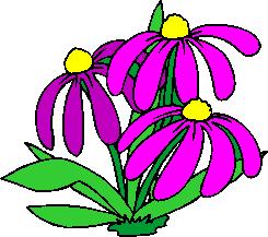 flower image 36