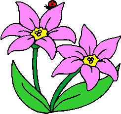 flower image 37