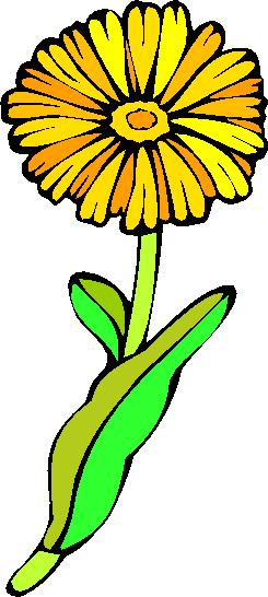 flower image 4