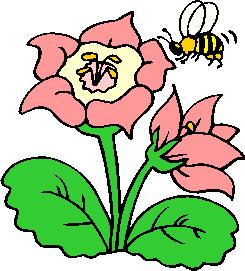 flower image 40