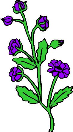 flower image 41