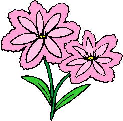 flower image 42