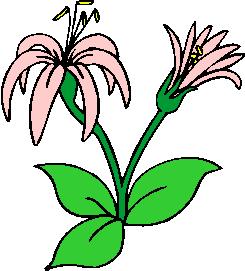 flower image 46