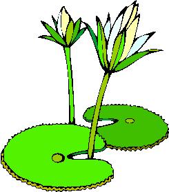 flower image 8