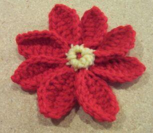 all petals of Christmas pointsettia flower
