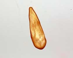thanksgiving napkin ring image 9