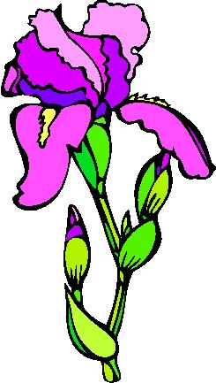 flower image 11