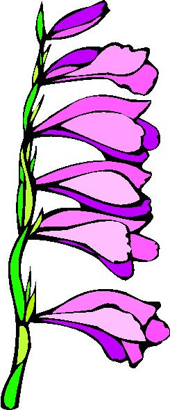 flower image 16