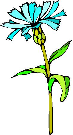 flower image 17