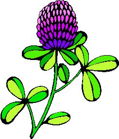 flower image 18