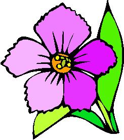 flower image 19