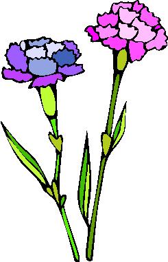 flower image 20