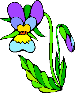 flower image 27
