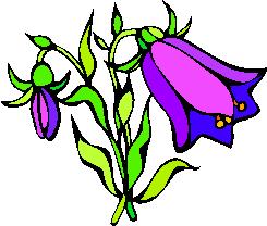 flower image 28