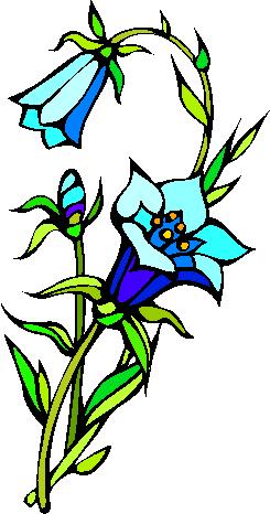 flower image 29