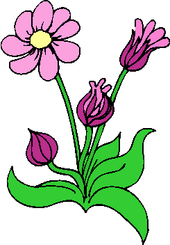 flower image 33