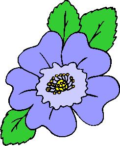 flower image 39
