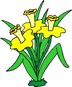 flower image 45