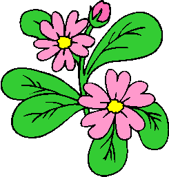 flower image 47