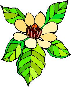 flower image 6