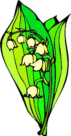 flower image 9
